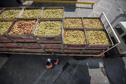 Truck transporting apples - ZEF14716