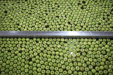 Green apples in factory being washed - ZEF14719