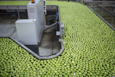 Green apples in factory being washed - ZEF14725