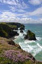 Great Britain, England, Cornwall, near Newquay, Bedruthan Steps, rocky coast, marsh daisies - SIEF07588
