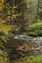 Germany, Thuringia, Ziegenrueck, mountain stream in autumn - MELF00189