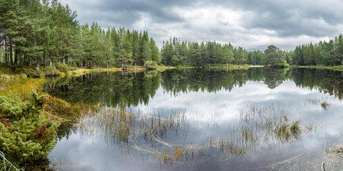 UK, Scotland, Highland, Cairngorms National Park, Glenmore Forest Park, Lochan nan Geadas - STSF01404