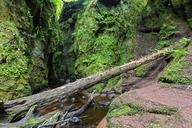 Great Britain, Scotland, Trossachs National Park, Finnich Glen canyon, The Devil's Pulpit, River Carnock Burn - FOF09500