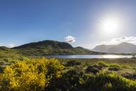 Great Britain, Scotland, Scottish Highlands, Glencoe, Rannoch Moor, Lochan na H'Achlaise - FOF09519