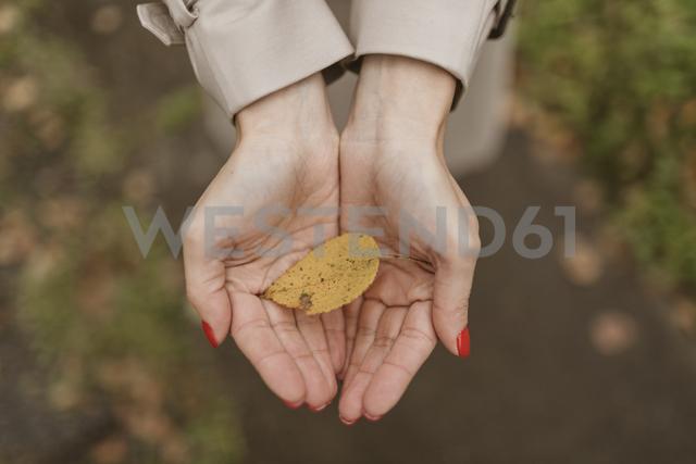 Woman's hands holding autumn leaf - KMKF00057