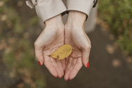 Woman's hands holding autumn leaf - KMKF00057
