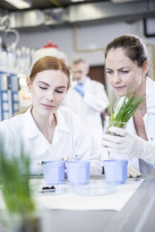 Scientists in lab examining plants and soil sample - WESTF23712