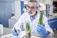 Scientist in lab examiming plant and taking notes - WESTF23715