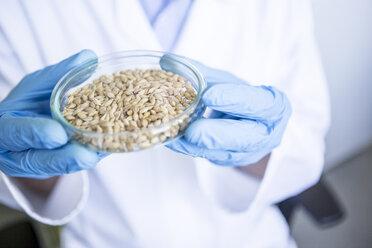 Scientist in lab holding grain sample in petri dish - WESTF23742