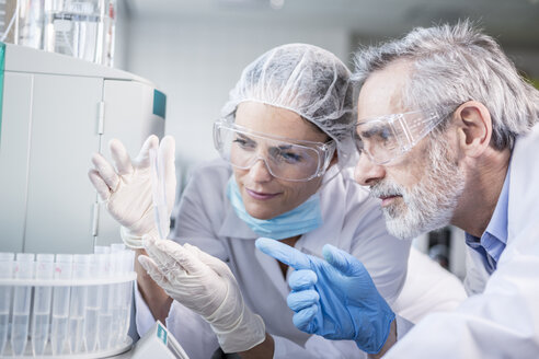 Two scientists examining samples in lab - WESTF23748