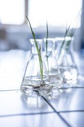 Plant seedlings in beakers in lab - WESTF23754