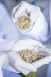 Scientists in lab examining grain samples - WESTF23763