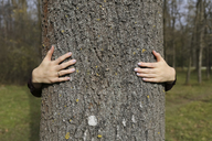 Hands of woman hugging a tree in forest - FCF01316