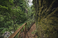 Spain, Canary Islands, La Palma, Path in tropical forest - DHCF00161