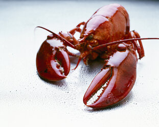 Fresh cooked lobster on wet ground - PPXF00138