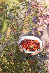 Woman picking rosehips - DEGF00952