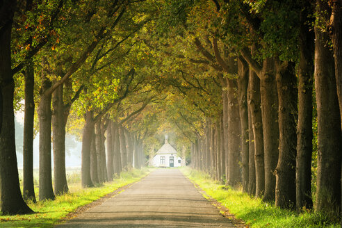 Autumnal avenue with one-family house in the background - KLRF00553