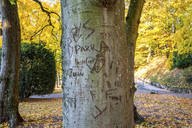 Germany, Baden-Wuerttemberg, Heidelberg,  Names and hearts scarified in tree trunks - PUF00946