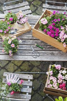 Gardening, planting of summer flowers - GWF05328