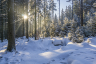 Germany, Saxony-Anhalt, Harz National Park, winter forest in the evening - PVCF01182