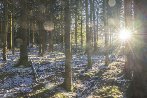 Germany, Lower Saxony, Altenau, Harz Nature Park in winter, against morning sun - PVCF01194