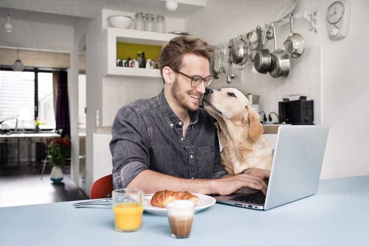 Smiling man with dog using laptop in kitchen at home - PESF00764 - Peter Scholl/Westend61