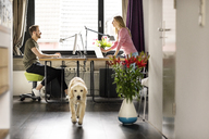 Man and woman with dog working at desk at home - PESF00770