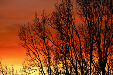 Germany, evening sky and trees in winter - JTF00865