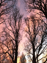 Eevening sky and trees in winter - JTF00868