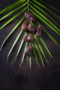 Dates on palm leaf - CSF28589