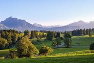Germany, Bavaria, Swabia, Allgaeu, East Allgaeu, Alpine foothills, Rieden am Forggensee with Saeuling and Gehrenspitze - SIEF07651