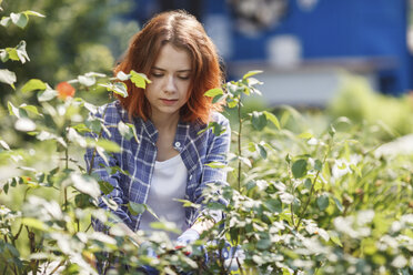 Young woman pruning roses - VPIF00270