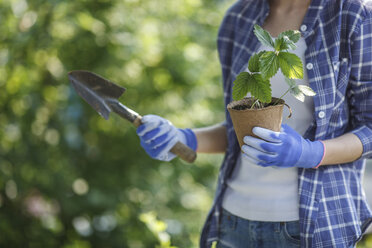 Female gardner holding hand trowel and strawberry plant - VPIF00273