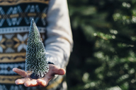 Little boy holding a toy Christmas tree, close up - MJF02217