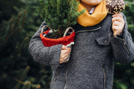 Happy boy preparing for Christmas , holding potted tree, eating chocolate dipped apple - MJF02247