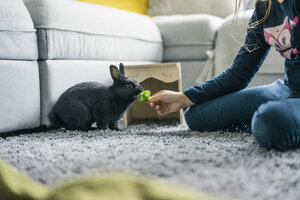 Girl feeding hare in living room - MOEF00580