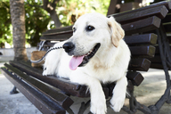 Dog relaxing on bench - IGGF00320