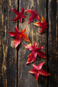 Six autumn leaves of sweetgum on dark wood - CSF28640