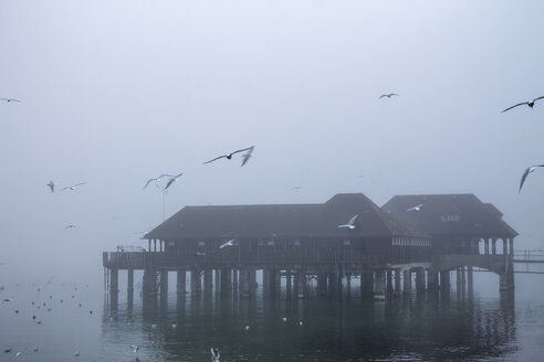 Switzerland, Canton of St. Gallen, Rorschach, Lake Constance, Badhuette and fog, flying seagulls - PUF01017