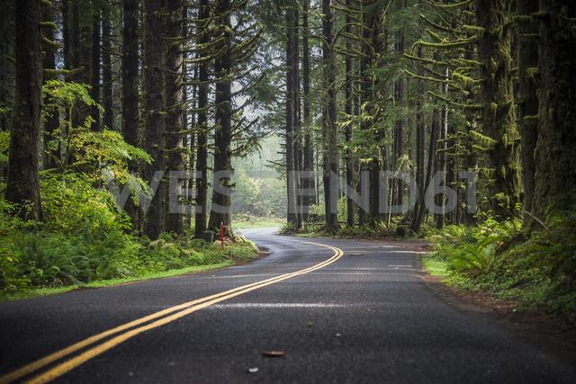 USA, Washington State, Hoh Rain Forest, Road - STCF00370 - Spotcatch/Westend61