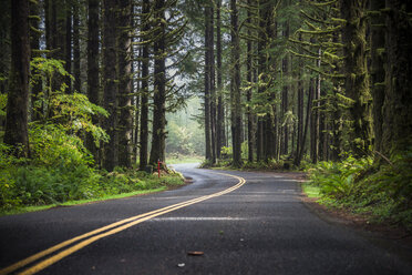 USA, Washington State, Hoh Rain Forest, Road - STCF00370