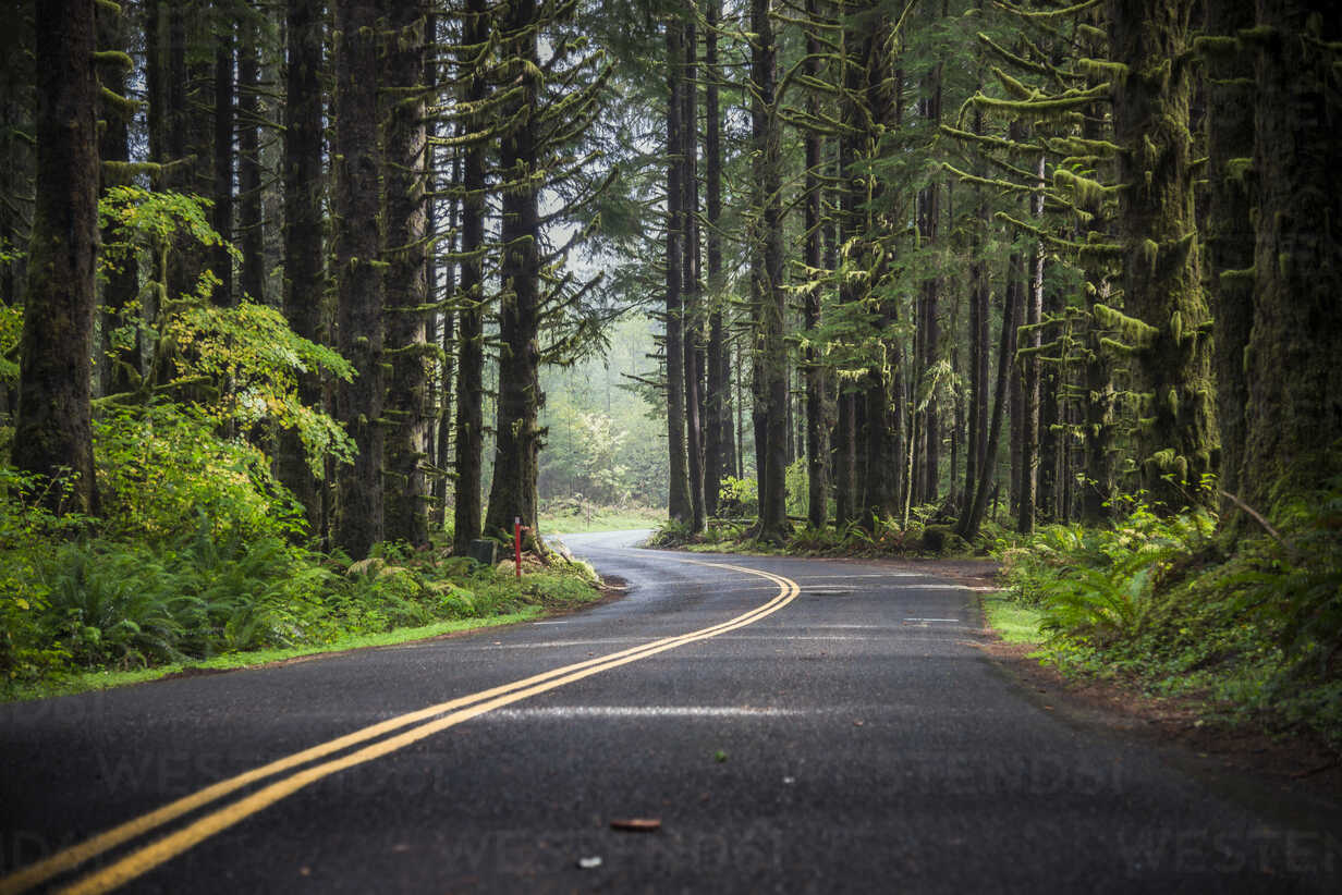 USA, Washington State, Hoh Rain Forest, Road - STCF00370 - Spotcatch/Westend61