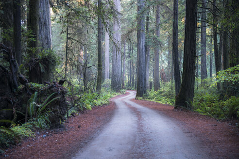 USA, California, Crescent City, Jedediah Smith Redwood State Park, road - STCF00379