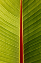 Macro of banana leaf - JTF00876
