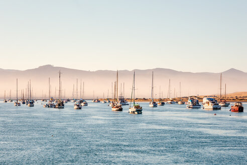 USA, California, Morro Bay, port of Morro Bay, sailing boats - WVF00863