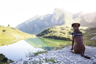 Austria, South Tyrol, dog sitting on viewing point - FKF02880