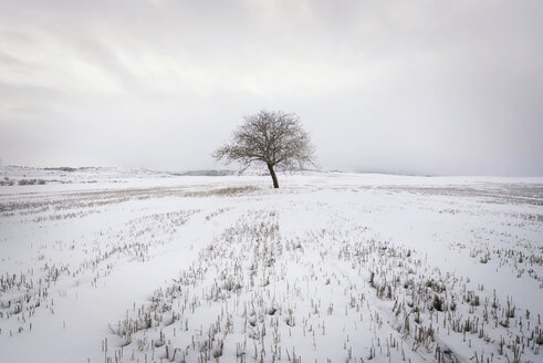 Spain, single bare tree in snow-covered winter landscape - DHCF00168