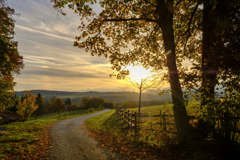 Germany, Bavaria, Upper Bavaria, Miesbach, Taubenberg, forest track in autumn at sunrise - LBF01712