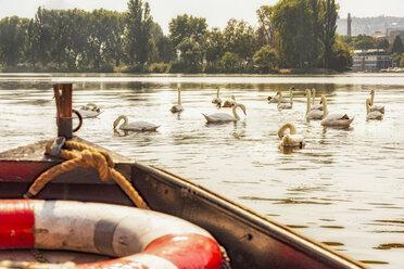 Czech Republic, Prague, swans and boat on Vltava - CSTF01588