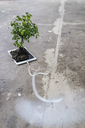 Little tree growing on digital tablet - FLAF00033